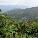 Těžce prostupná tropická džungle Taiwanu
