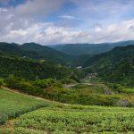 Čajová plantáž v oblasti Pinglin nedaleko od Pacifiku