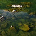 Voda v místních řekách bývá průzračně čistá