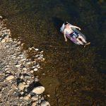 Relax na lehátku na hladině řeky v oblasti Pinglin