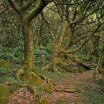 Beitou Hills pralesní stezka
