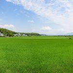 Rýžová plantáž v East Rift Valley