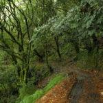 mtb-trailovani-v-horach-taiwanu-poprve-na-nangao-trail_0006