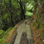 mtb-trailovani-v-horach-taiwanu-poprve-na-nangao-trail_0017